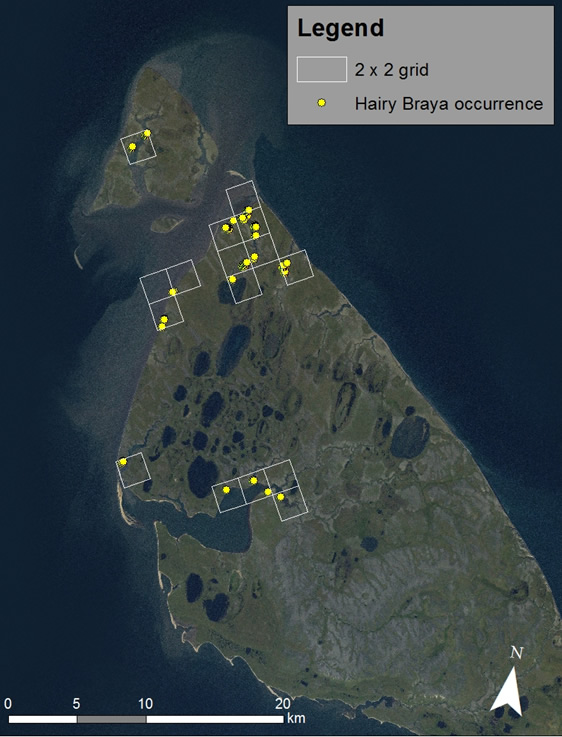 Annotated aerial image showing the index of area of occupancy (IAO) of the Hairy Braya (see long description below).