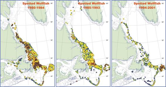 Figure 2b, Change in the distribution of A. minor between 1980 and 2001 based on fall research surveys, Newfoundland and Labrador Region. Red shades depict areas of highest density, shading through yellow to green to blue as areas of lowest density. Sampling north of Lat. 60o, in the Gulf of St. Lawrence and on the Scotian Shelf is incomplete.