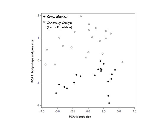 Chart showing the results of a principal component analysis comparing the morphology of the Coastrange Sculpin (Cultus Population) and the Coastrange Sculpin.