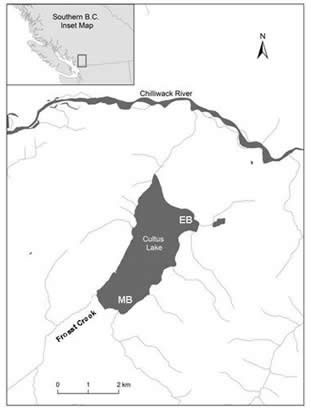 Map showing the location of Cultus Lake and the locations of Entrance Bay and Maple Bay.