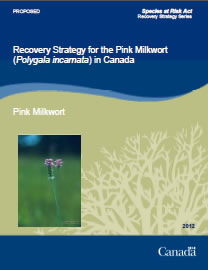 Cover page of the publication: Recovery Strategy for the Pink Milkwort (Polygala incarnata) in Canada [PROPOSED] – 2012.