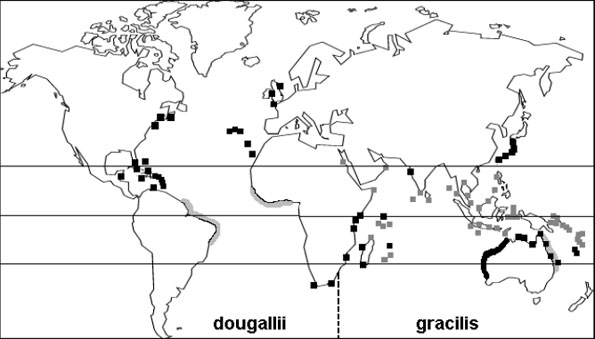 Map showing the global range of the Roseate Tern. The map shows known breeding sites, putative range or historic records, and wintering areas of temperate breeding populations.