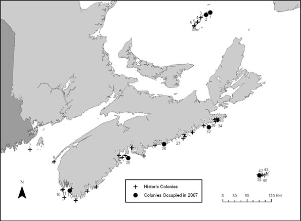 Map showing Canadian Roseate Tern breeding locations. The map shows historic colonies and colonies occupied in 2007. Historic colonies had at least one pair of Roseate Terns at least once since 1982 but not in 2007.