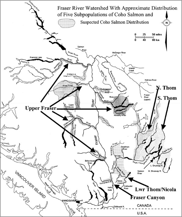 Figure 3: Approximate distribution of 5 subpopulations of coho salmon (North Thompson, South Thompson, Lower Thompson/Nicola, Fraser Canyon, and upper Fraser) within the interior Fraser River watershed.