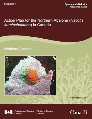 Species at Risk Act action plan series, Action plan for the Northern Abalone (Haliotis kamtschatkana) in Canada - proposed.