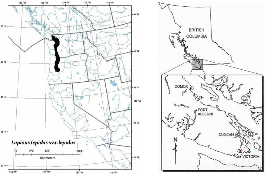 Figure 7. Global and Canadian distribution of prairie lupine (see long description below).