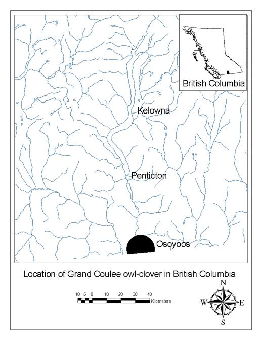 Figure 3 shows the distribution of the Branched Phacelia in Canada.  There are three locations, all on Mount Kruger, B.C.