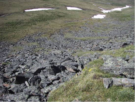 Photo of typical Collared Pika habitat in the Ruby Ranges of southwestern Yukon that combines talus slopes for shelter and alpine meadows for forage.