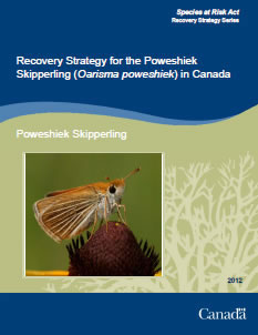 Cover of the publication: Recovery Strategy for the Poweshiek Skipperling (Oarisma poweshiek) in Canada – 2012.