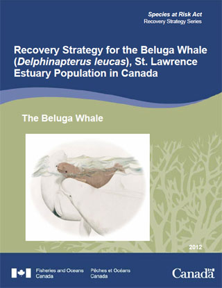 Species at Risk Act recovery strategy series, recovery strategy for the Beluga whale (Delphinapterus leucas) St. Lawrence Estuary population in Canada.