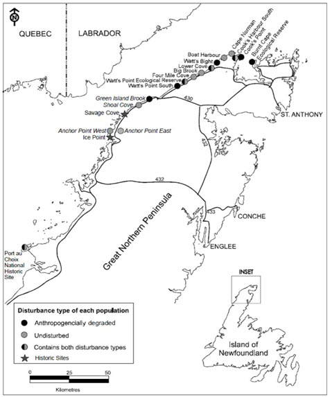 Map showing the distribution of Fernald's Braya populations on the Great Northern Peninsula of the island of Newfoundland and their level of disturbance (see long description below).