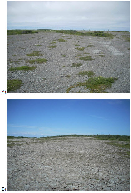 Two photo images of undisturbed limestone barrens habitat (see long description below).