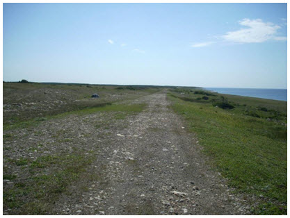 Photo of anthropogenically degraded limestone barrens and abandoned roadbed in Watts Point Ecological Reserve (see long description below).