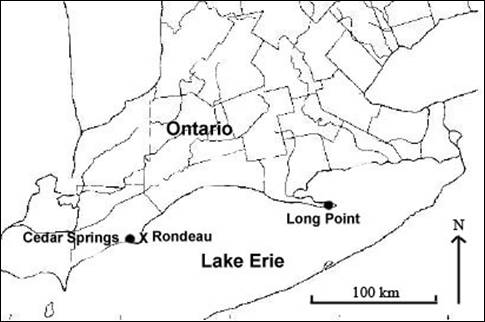 Map showing the distribution of Bent Spike-rush Eleocharis geniculata in Ontario.