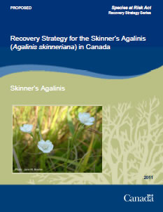 Cover of the publication: Management Plan for the Recovery Strategy for the Skinner's Agalinis (Agalinis skinneriana) in Canada [PROPOSED] – 2011.