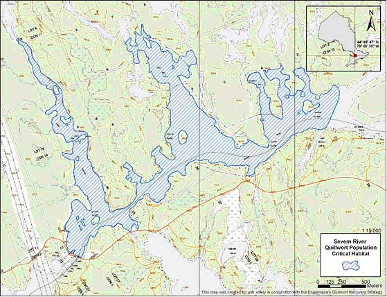 Figure 4. The locations of Engelmann's quillwort (Isoetes engelmannii) on the Severn River, and the critical habitat.