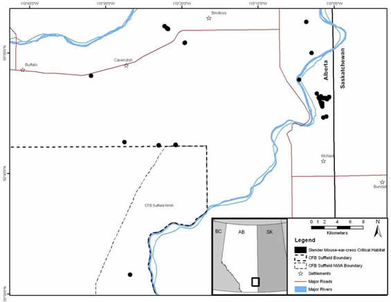 Appendix C shows maps for Alberta of the critical habitat for the slender mouse-ear-cress.
