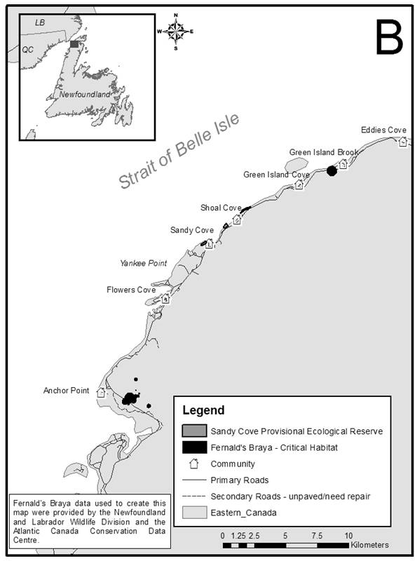 Figure 7B is a map showing locations of critical habitat for Fernald's Braya, from Anchor Point to Green Island Brook, on the limestone barrens of the Great Northern Peninsula of insular Newfoundland.