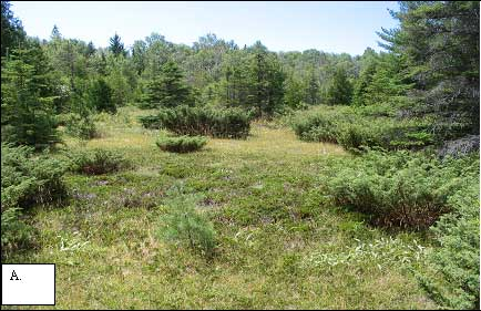 Figure 1-A: Typical Hill's Thistle habitat with open grassy ground.