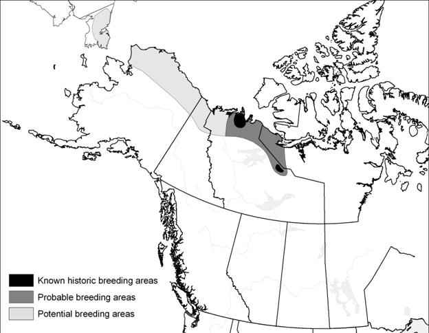 Figure 2. Known historical (black), probable (dark grey), and potential breeding areas (light grey) of Eskimo Curlews