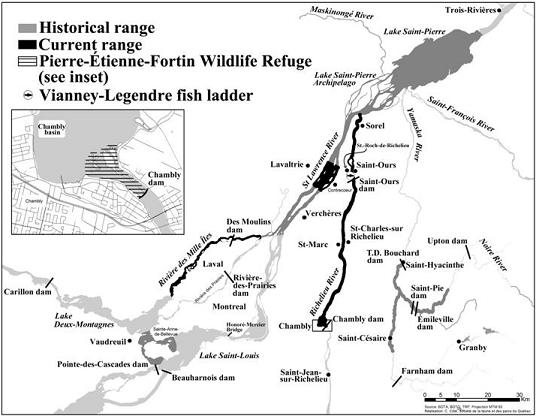Figure 5: Historical and current range of the copper redhorse (Map by Chantal Côté, Société de la faune et des parcs du Québec).