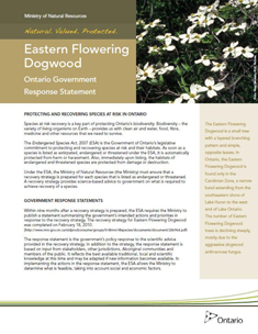 Eastern Flowering Dogwood cover photo for part 3
