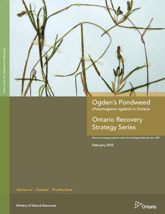 Recovery Strategy for Ogden's Pondweed in Ontario Report Cover. Description follows