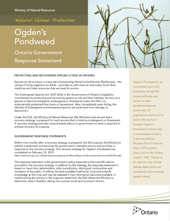 Ogden's Pondweed Ontario Government Response Statement report cover. Description follows.