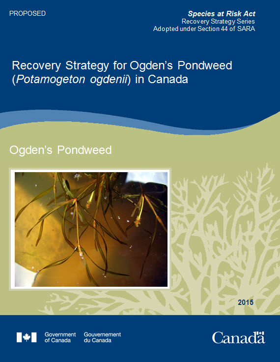 Recovery Strategy for Ogden's Pondweed report cover image