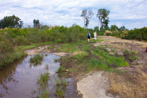 Figure 4: Destruction of habitat caused by all-terrain vehicles at Harewood Plains (photo courtesy, G.W. Douglas, June 29, 2003).