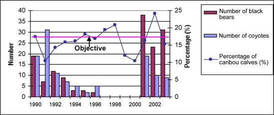 Number of black bear and coyotes captured during predator control operations (1990-1996; 2001-2003), and recruitment (% of calves) in the Gaspésie Woodland Caribou population.
