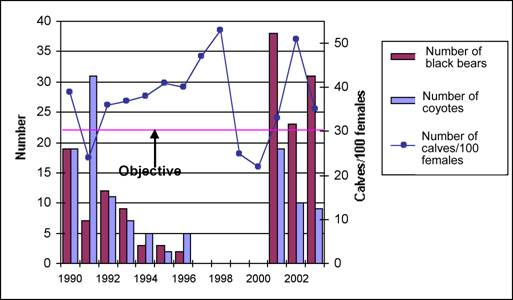 Number of black bear and coyotes captured during predator control operations (1990-1996; 2001-2003); recruitment (calves/100 females) in the Gaspésie Woodland Caribou population.