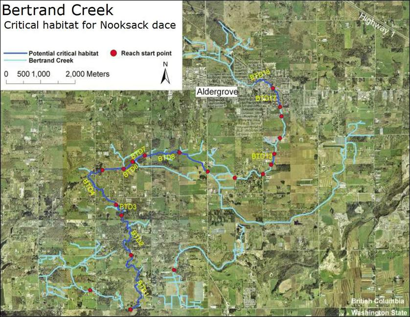 Bertrand Creek: Critical habitat for Nooksack dace