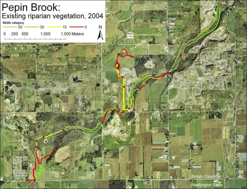 Pepin Brook: Existing riparian vegetation, 2004