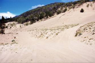 Figure 11: Heavy recreational vehicle use, which packs the sand and eliminates Carex sabulosa clones, is evident here on the Klondike Highway dunes, near Carcross.