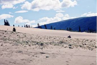 Figure 12: Recreational use by an all-terrain vehicle on the Klondike Highway dune system near the town of Carcross.