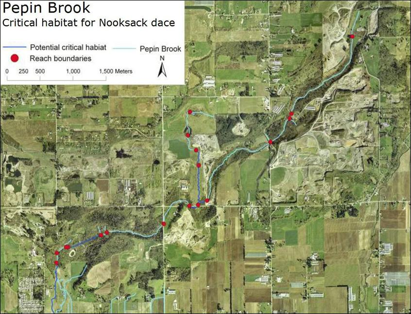 Pepin Brook: critical habitat for Nooksack dace