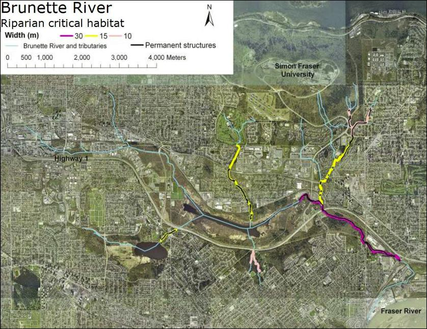 Brunette River:Riparian critical habitat