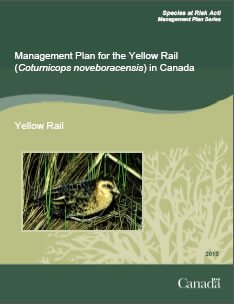 Cover page of the publication: Management Plan for the Yellow Rail (Coturnicops noveboracensis) in Canada – 2013.