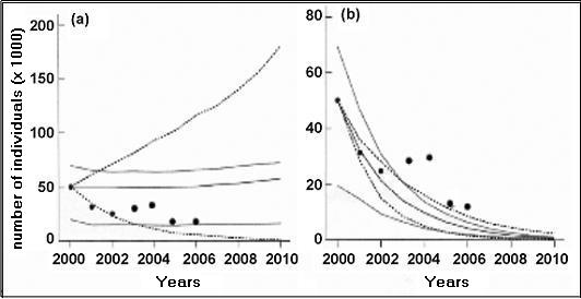 Figure 12: Predicted population trends of adult rufa Red Knots (middle grey line), juveniles (lower grey line), and the sum of these two age groups (top grey line) for 10 years from 2000; associated 95% confidence limits for adults are shown as dashed lines.