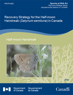 Recovery Strategy for the Half-moon Hairstreak in Canada