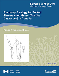 Species at Risk Act Recovery Strategy Series Recovery Strategy for Forked Three-awned Grass (Aristida basiramea) in Canada.