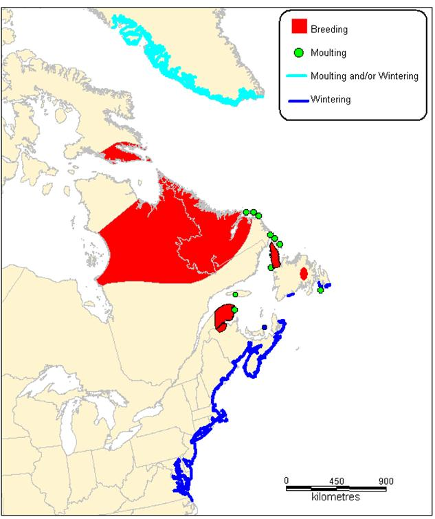 Figure 1.  Map of the breeding, wintering and moulting locations of the Harlequin Duck in eastern North America and Greenland.