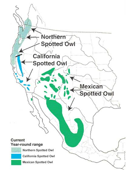 Figure 1. Current year-round range of Spotted Owls in North America. (Adapted from Gutiérrez et al. 1995)