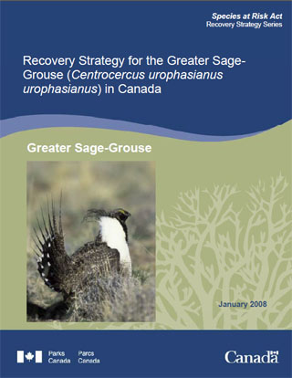 Species at Risk Act Recovery Strategy Series Recovery Strategy for the Greater Sage-Grouse (Centrocercus urophasianus urophasianus) in Canada Greater Sage-Grouse (January 2008).