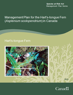 Cover page of the publication: Management Plan for the Hart's-tongue Fern (Asplenium scolopendrium) in Canada – 2013.