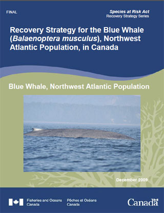 Species at Risk Act recovery strategy series, recovery strategy for the blue whale (Balaenoptera musculus), Northwest Atlantic population, in Canada.