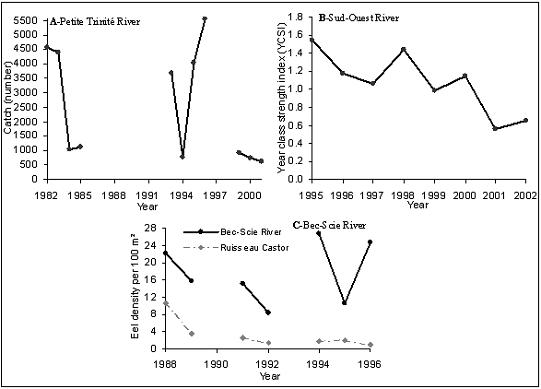 Figure 14.  Indices of juvenile abundance for FEA2: (A) Number of eels caught in the Petite Trinité River (1982-2001, from Fournier and Caron 2005); (B) Year class strength index (YCSI) based on juvenile captures during upstream migration in the Sud-Ouest River (1995-2002, from G. Verreault, MNRF, Secteur Faune Québec); (C) Eels per 100 m² from electrofishing surveys conducted in the Bec-Scie River, Anticosti Island (1988-1996).