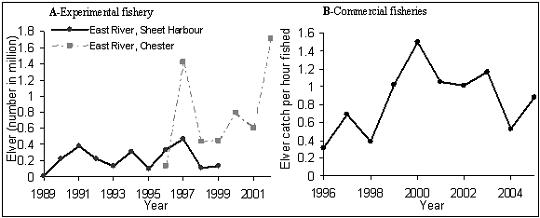 Figure 16. (A) Elver counts in two Nova Scotian rivers (from R. Bradford, DFO): East River, Sheet Harbour (1989-1999) and East River, Chester (1996-2002); (B) CPUE from commercial elver licences (1996-2005, 2005 being incomplete).