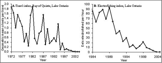 Figure 8.  Fisheries independent indices of abundance of yellow eels in FEA1 (from J.M. Casselman, OMNR): (A) bottom trawl CPUE from Bay of Quinte, Lake Ontario (1972-2004); (B) electrofishing CPUE from eastern Lake Ontario (1984-2004).